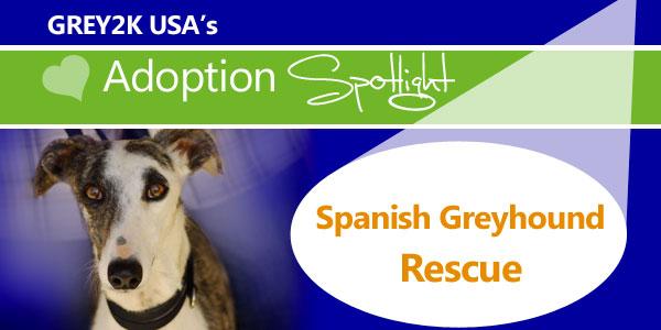 <br> Adoption Spotlight: Spanish Greyhound Rescue
