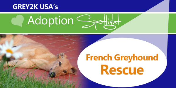 <br> Adoption Spotlight: French Greyhound Rescue