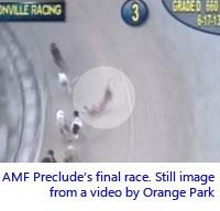 AMF Preclude
