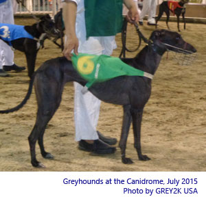 dogs at Canidrome