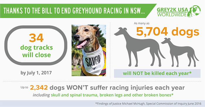NSW greyhound racing infographic