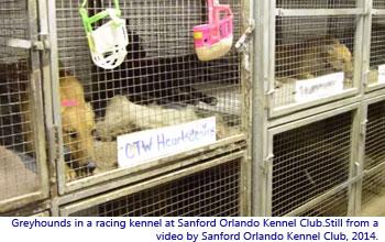 Caged dog at Sanford Orlando