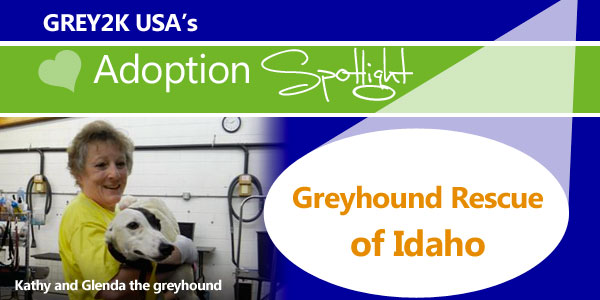 <br> Adoption Spotlight: Greyhound Rescue of Idaho