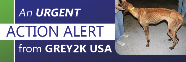 Urgent Action Alert from GREY2K USA