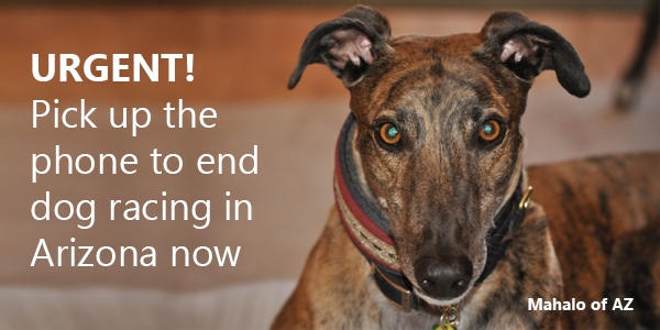 Urgent! Pick up the phone to end dog racing in Arizona now