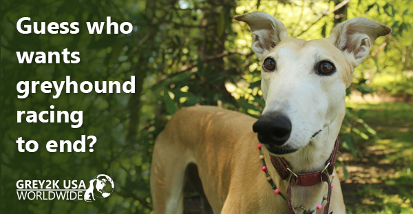 Guess who wants greyhound racing to end?