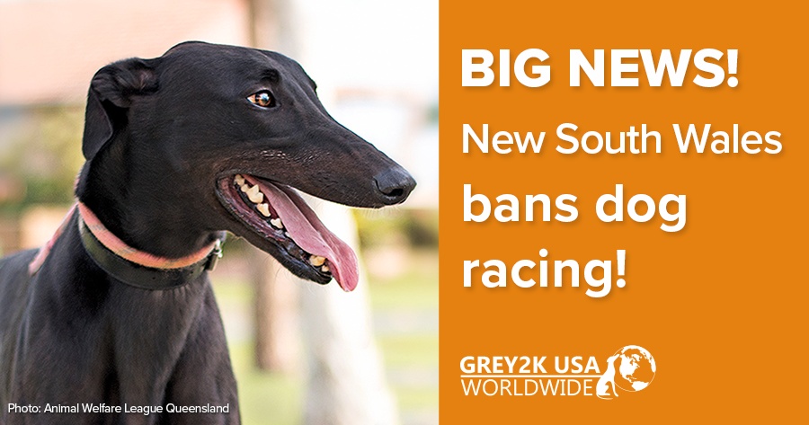 BIG NEWS! New South Wales bans dog racing!