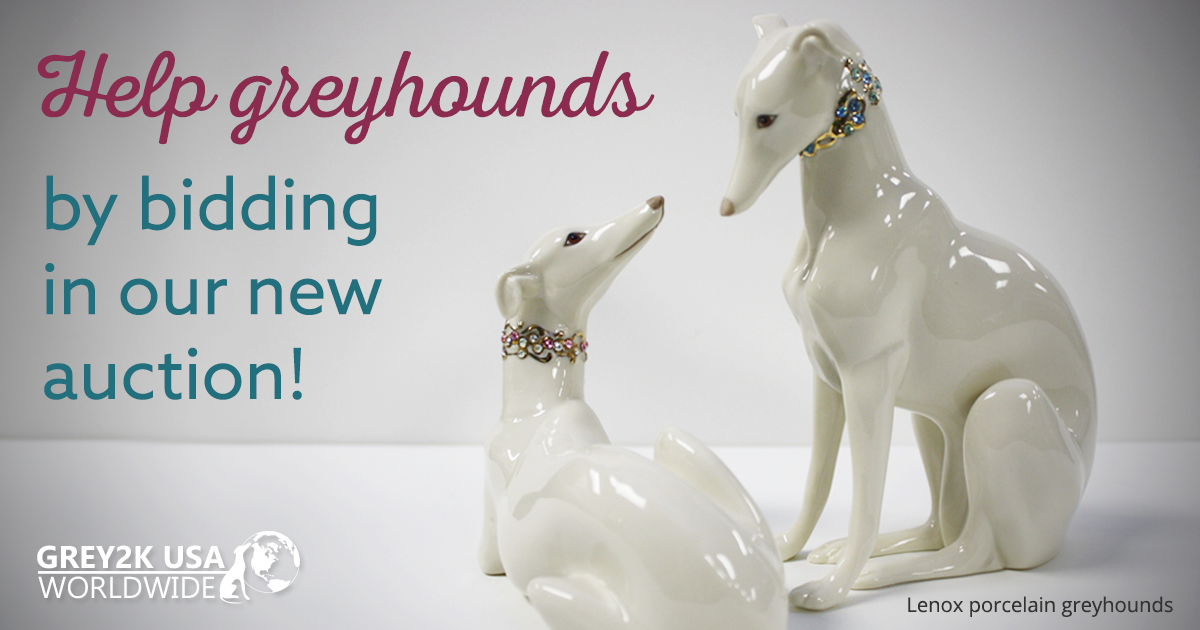 Help greyhounds by bidding in our new auction