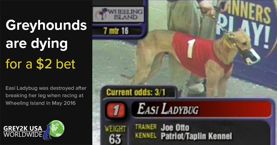 Greyhounds are dying for a $2 bet
