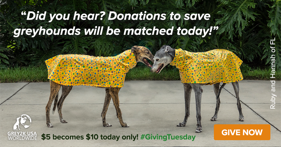 Donations to save greyhounds are matched today!