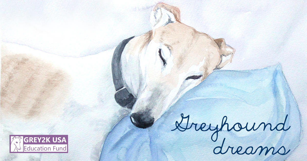Greyhound Dreams
