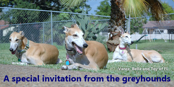 A special invitation from the greyhounds