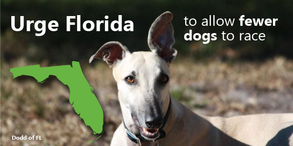 Urge Florida to Allow Fewer Dogs to Race