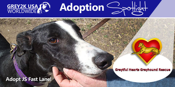 <br> Adoption Spotlight: Pennsylvania's Greytful Hearts Greyhound Rescue
