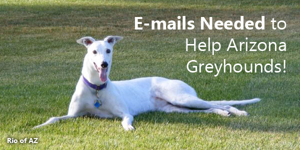 E-mails Needed to Help Arizona Greyhounds!