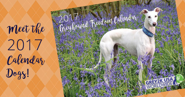 Meet the 2017 Calendar Dogs