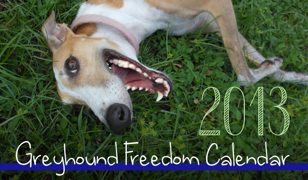 Hope rises for English greyhounds