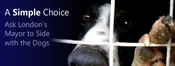Help Needed: Only Days Left to Give Greyhounds a Voice!
