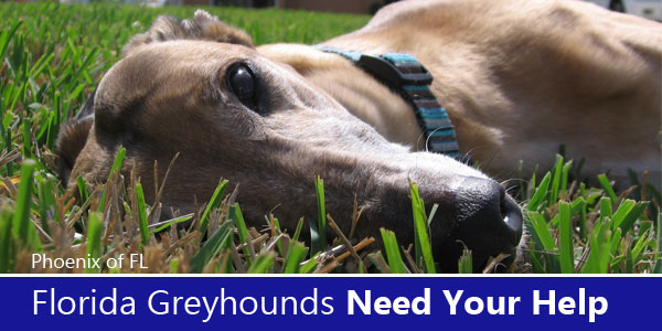 Florida Greyhounds Need Your Help