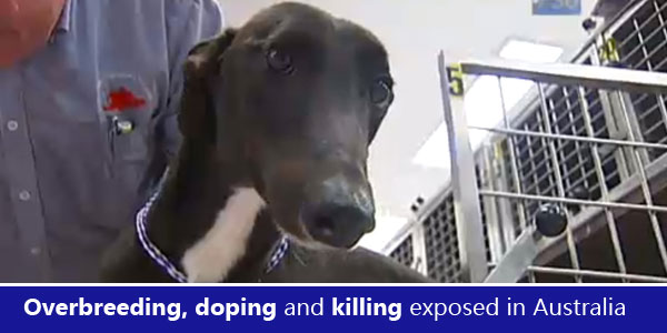 Overbreeding, doping and killing exposed in Australia