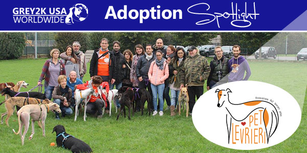 <br> Adoption Spotlight: Pet Levrieri
