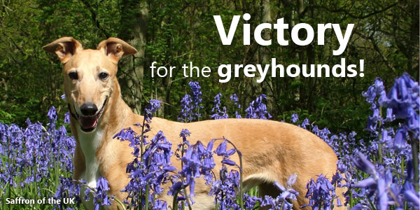 Victory for the Greyhounds!
