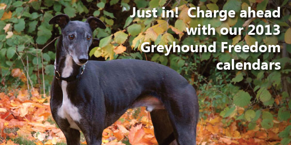 VJust in!  Charge ahead with our 2013 Greyhound Freedom calendars