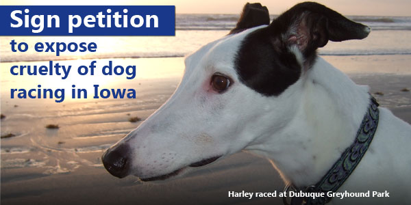 Sign petition to expose cruelty of dog racing in Iowa