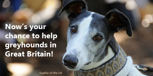 Now's your chance to help greyhounds in Great Britain!