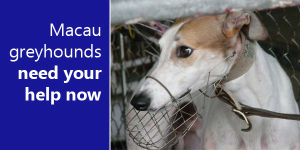 These greyhounds need your help