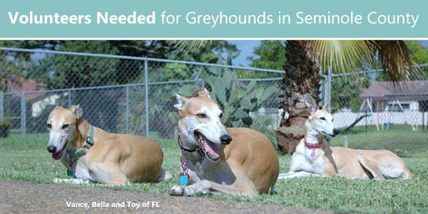 Volunteers Needed for Greyhounds in Seminole County