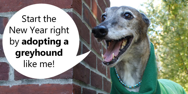 Zoe says start the New Year right by adopting a greyhound like me!