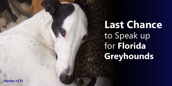 Last Chance to Speak up for Florida Greyhounds