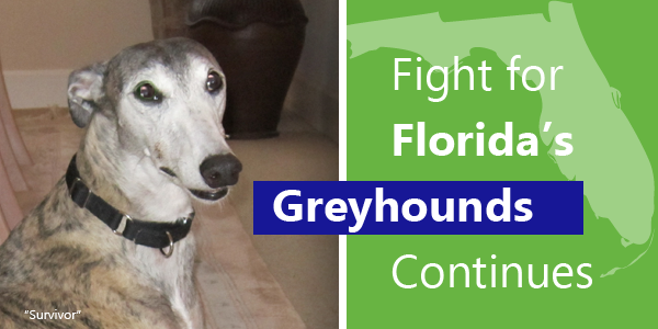 Fight for Florida's Greyhounds Continues
