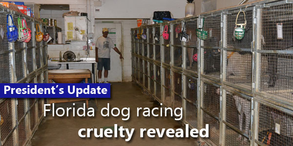 Florida Dog Racing Cruelty Revealed