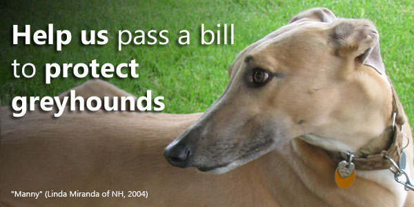 Help us pass a bill to protect greyhounds