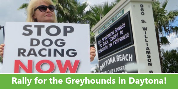 Rally for the Greyhounds in Daytona!