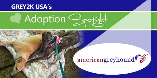 <br> Adoption Spotlight: Spanish Greyhound Rescue