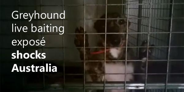 Greyhound live baiting expose shocks Australia