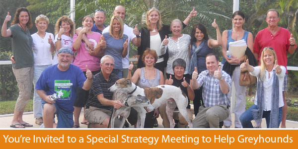 You're Invited to a Special Strategy Meeting to Help Greyhounds