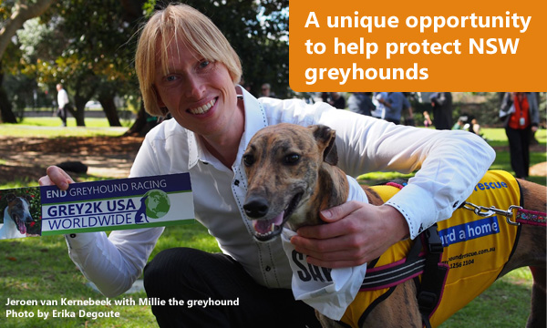A unique opportunity to help protect NSW greyhounds