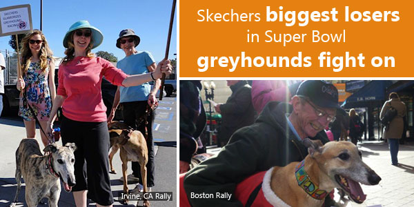 Skechers biggest losers in Super Bowl, greyhounds fight on