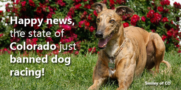 Happy news, the state of Colorado just banned dog racing!