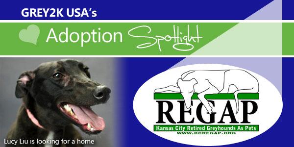 <br> Adoption Spotlight: Kansas City REGAP