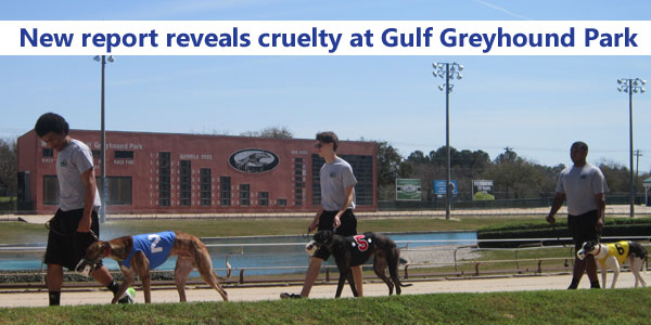 New report reveals cruelty at Gulf Greyhound Park