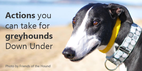 Actions you can take for greyhounds Down Under
