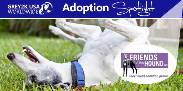 <br> Adoption Spotlight: Friends of the Hound