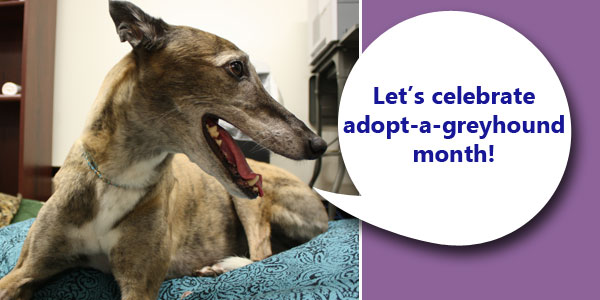 Zoe says let's celebrate adopt-a-greyhound month