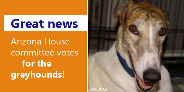 Great news! Arizona House committee votes for the greyhounds