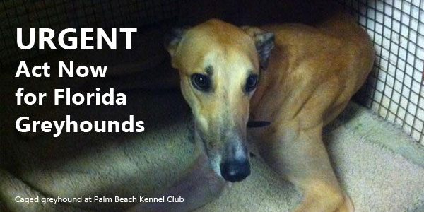 URGENT: Act Now for Florida Greyhounds